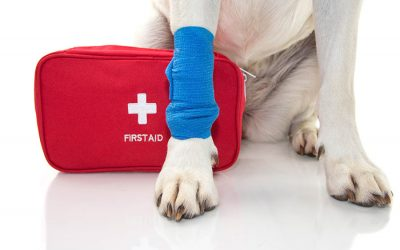 5 Must-Haves for Your Pet First Aid Kit