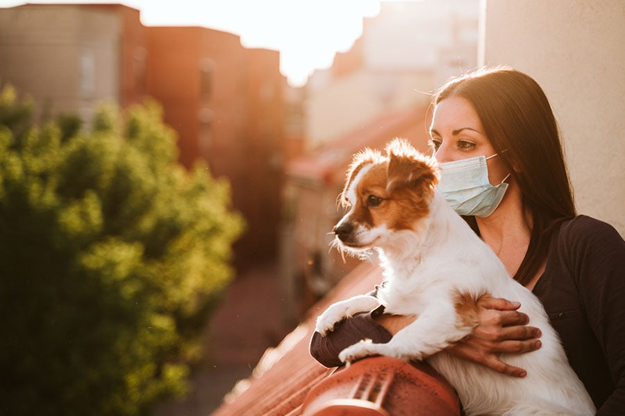5 Ways to Transition your Pet to the New Normal