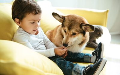Dogs & Young Children. How to Integrate Them Together