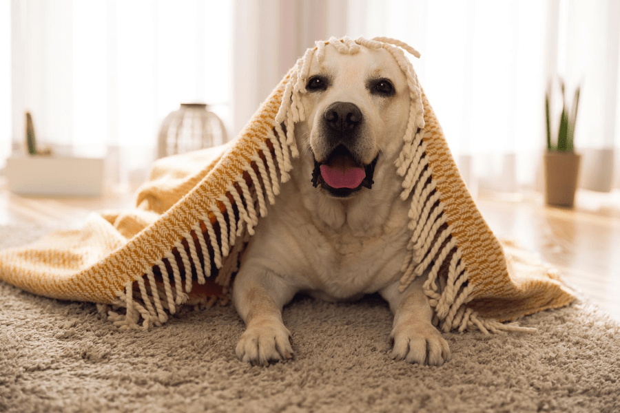 Tell Your Pet Sitter BEFORE You Head Out of Indianapolis