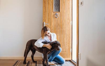 What to Tell Your Pet Sitter BEFORE You Head Out of Indianapolis