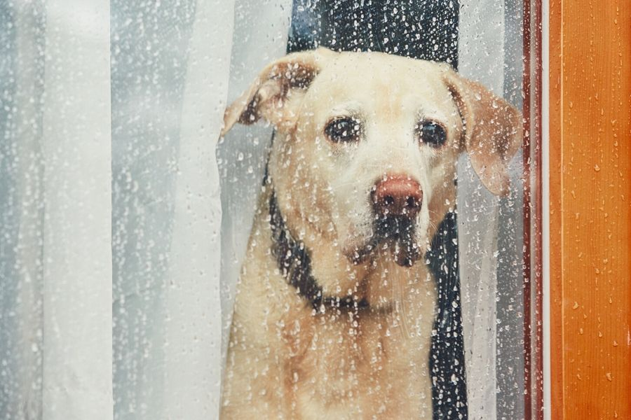 Why is My Dog Shaking? Helping Your Pet Cope with Anxiety