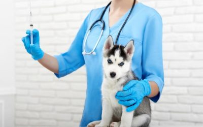 The Importance of Pet Vaccines