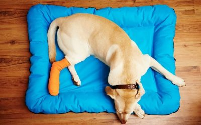 Signs Your Pet is in Pain (And What to Do About it)